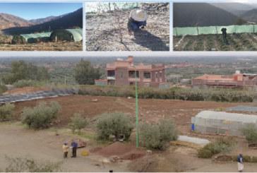 Les voies pour optimiser l'irrigation dans le Haut Atlas