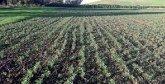 Région Rabat-Salé-Kénitra : La campagne agricole jugée satisfaisante
