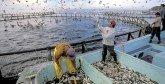 L'ANDA tient son conseil d'administration : 66 actions à réaliser en 2018 pour  développer l'aquaculture