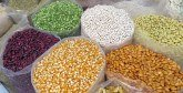Semences sélectionnées : La région de Casablanca-Settat fournit 35% de la production nationale
