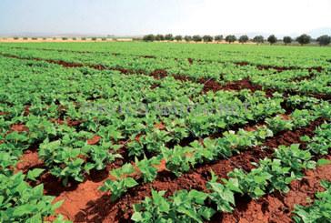 Agriculture : Les  pluies d'avril dopent  la campagne