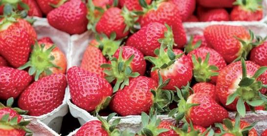Le 2ème Festival national des petits fruits rouges de Larache reporté au 22 mars