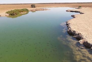 Dakhla : Sebkhat Imlili inscrite sur la liste Ramsar des zones humides