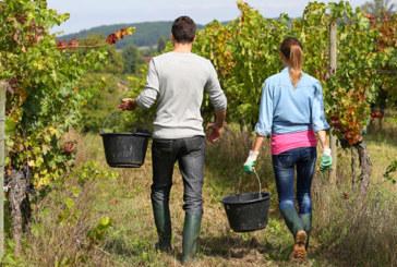 L'Australie envisage des visas pour les fermiers sud-africains blancs