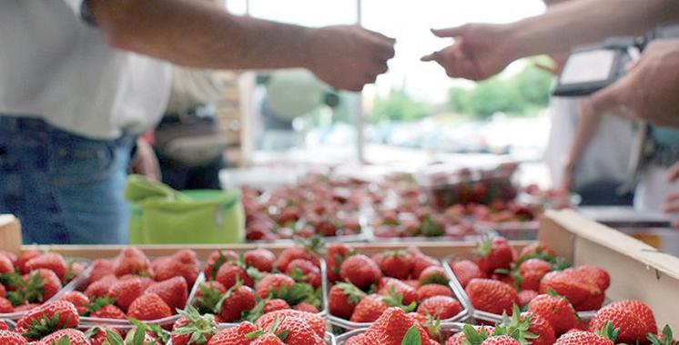 Filière des petits fruits rouges :  Un Chiffre d'affaires de 2,7 milliards DH dans le loukkos