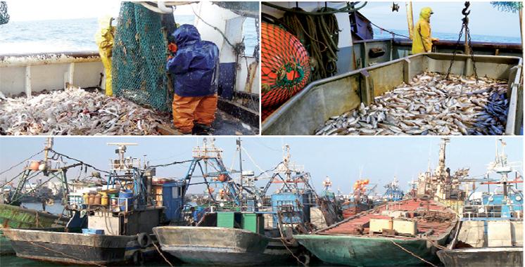 Investissements maritimes : Plus de  10 milliards de dirhams injectés à Dakhla