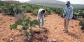 Pilier de l'économie locale : Le cactus, un véritable levier de développement