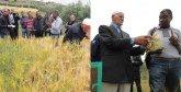 Al-Hoceima : De nouvelles variétés d'orge mises en avant