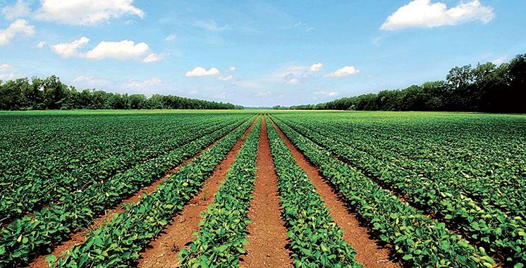 Grâce au  Fonds vert pour le climat : Le Souss se lance dans l'agriculture intégrée et durable