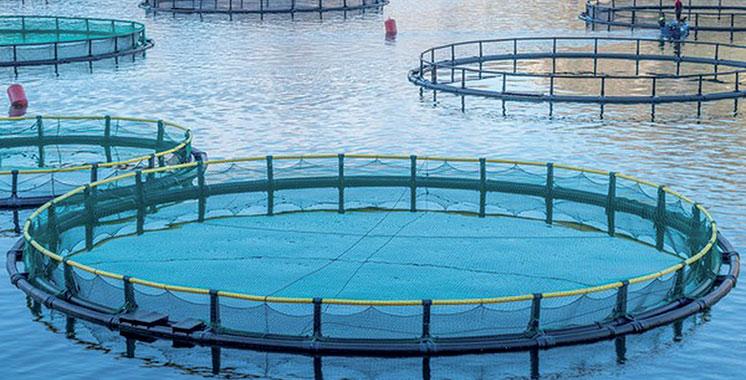 Aquaculture : L'ANDA examine les opportunités d'investissement à Guelmim-Oued Noun
