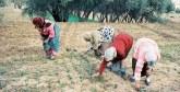 Petites exploitations agricoles : Les femmes toujours mal rémunérées