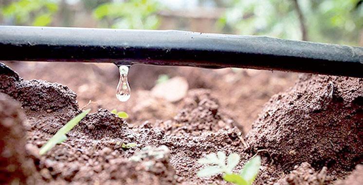 Irrigation localisée : 98% des superficies reconverties