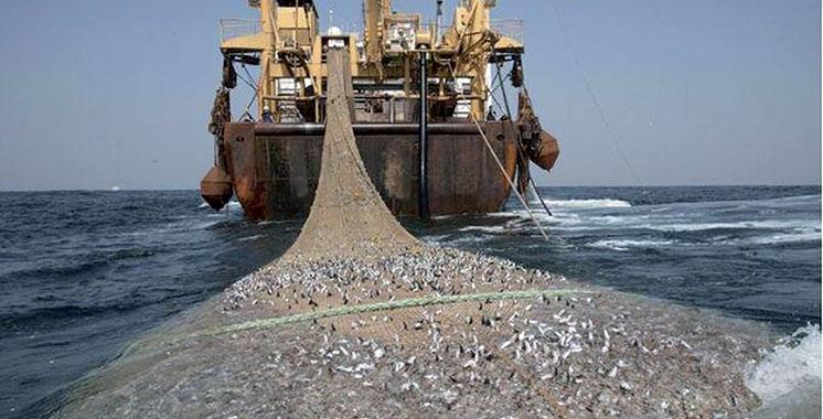 Pêche : Des opérateurs marocains en visite  de prospection à Saint-Pétersbourg