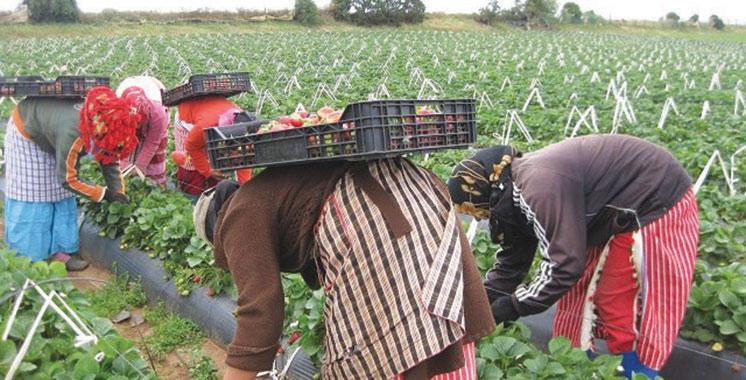 Rabat-Salé-Kénitra : La filière des fruits rouges génère environ  5,3 millions de journées de travail