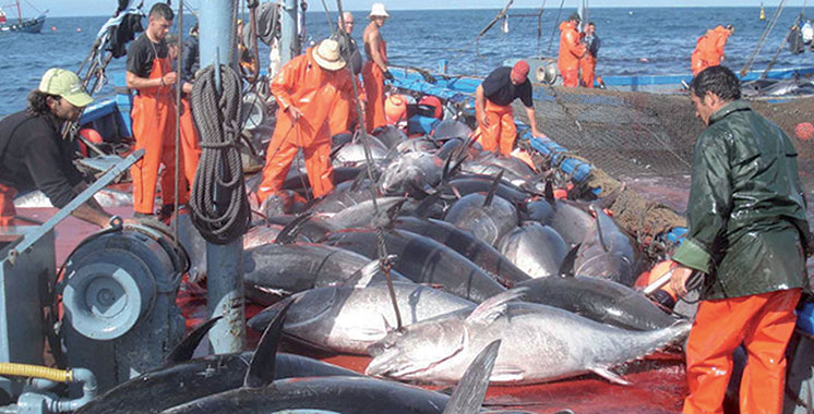 Accord de pêche : Ça sera avec le Sahara marocain !