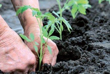 Agrégation agricole : Un modèle  qui a fait ses preuves