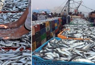 La Mafia de la sardine