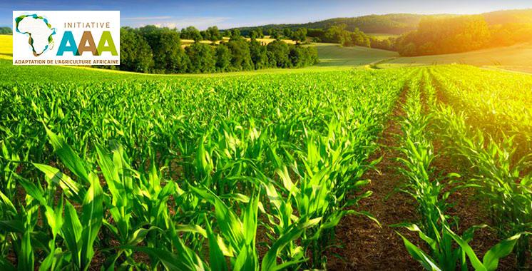 Le secteur agricole au Maroc et l'initiative marocaine «Triple A» présentés à Budapest