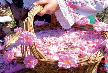 Le Festival de la rose du 10 au 13 mai  à Kelâat Mgouna