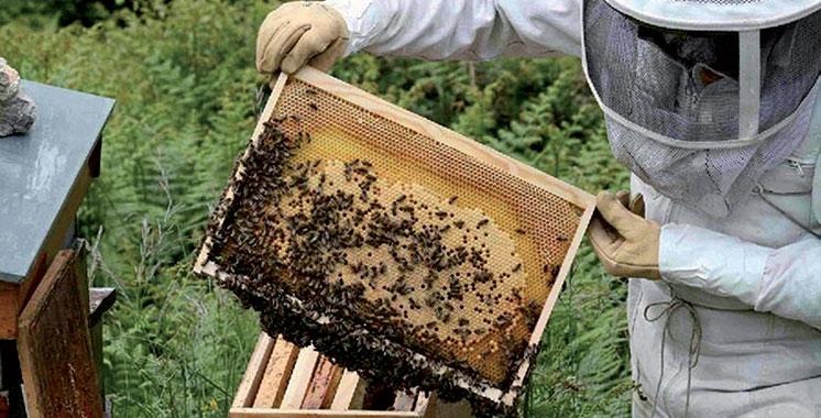 Agadir : La pollinisation des abeilles pour appuyer le développement agricole durable