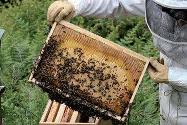 Une «Maison du miel» ouvre ses portes à Argana