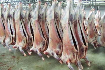 Tétouan : Ouverture de l'abattoir municipal  à l'occasion de l'Aïd Al Adha
