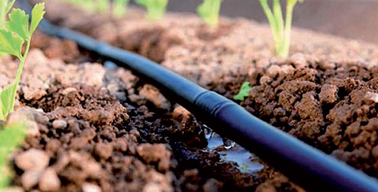 Exonération des agriculteurs du bassin du Loukkos de la redevance relative au minimum de consommation de l'eau d'irrigation : La Chambre d'Agriculture de Tanger-Tétouan-Al Hoceima salue la décision du ministère