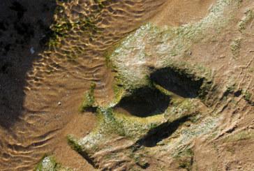 Le site d'empreintes de dinosaures d'Anza va intégrer la liste du patrimoine culturel national