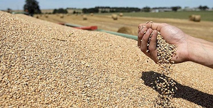 La production céréalière s'élève à 52 millions de quintaux