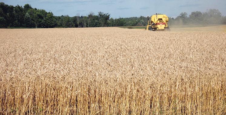 Campagne agricole 2017-2018 : Une récolte de 103 millions de quintaux, un record historique de rendement