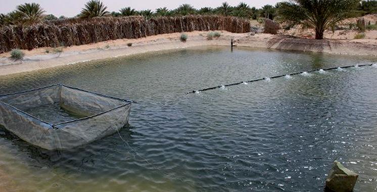 124 fermes aquacoles seront réalisées  à Dakhla-Oued Eddahab
