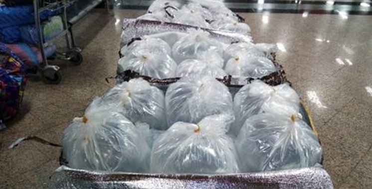 Saisie à l'aéroport Mohammed V de Casablanca de 78 kg de civelles vivantes