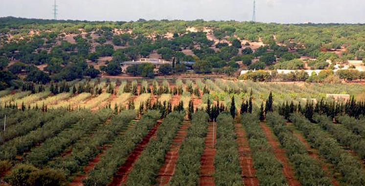 Province d'Essaouira : Une délégation d'experts égyptiens s'informe des potentialités agricoles