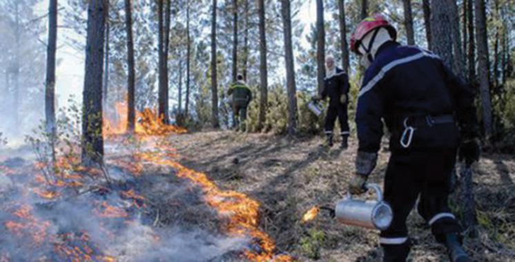 Incendies de forêts : 111 ha ravagés par le feu du 1er janvier au 25 juillet