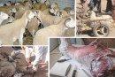 Encadrement de l'opération Aïd Al Adha : L'ONSSA assure