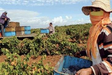 Secteur agricole : Plus de 251.000 salariés déclarés  à la CNSS en 2017