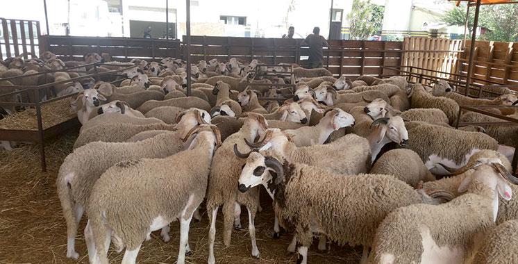 Lutte contre la fièvre aphteuse : Extension du programme aux ovins et caprins
