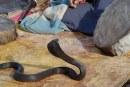 Le commerce illégal des animaux sauvages inquiète