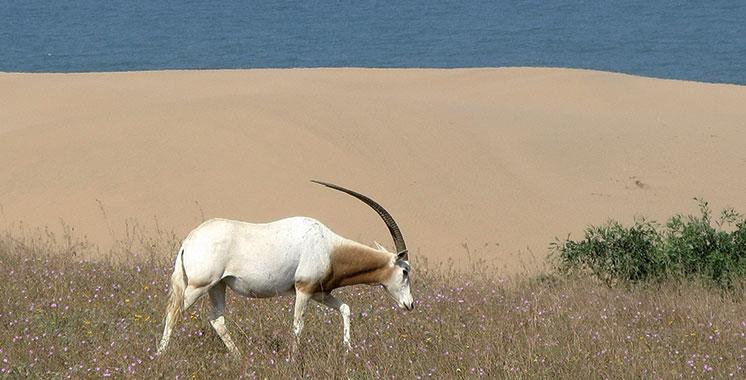 Circuits écotouristiques : Un safari pour découvrir la faune et la flore du parc du Souss-Massa