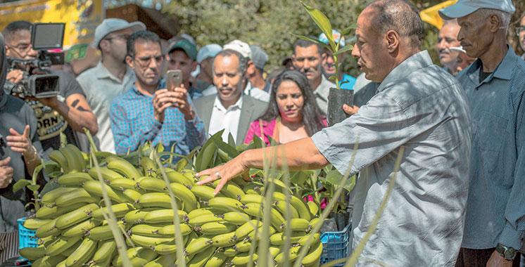 Bananes : Des agriculteurs à Kénitra bénéficient d'une formation de haut niveau
