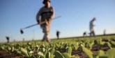 Symposium international 2018 de l'Apefel : L'agriculture marocaine face aux mutations nationales et internationales en débat