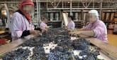 La viticulture à l'honneur à Benslimane