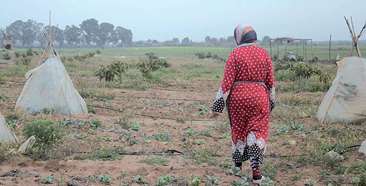 Terres Soulaliyates : Démarrage en 2019