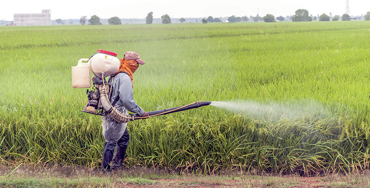 Le Plan Maroc Vert dans la province de Tata : 42 millions de dirhams d'investissements agricoles entre 2009 et 2019