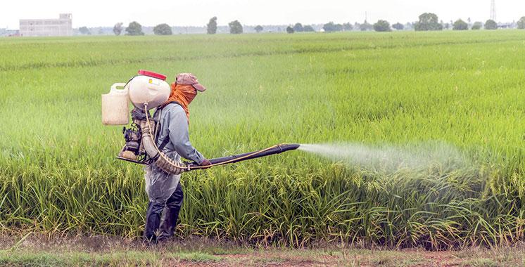 Le groupe renforce son dispositif de financement : Le Crédit Agricole du Maroc lance CAM leasing