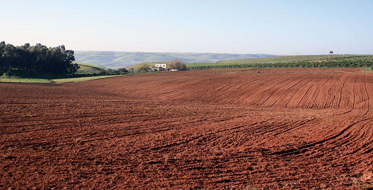 3.925 hectares du foncier public mobilisés pour le Plan Maroc Vert