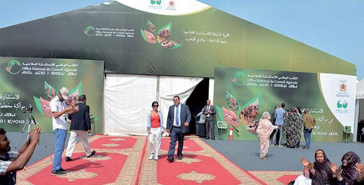 FAID 2018 : Une vitrine continentale pour l'agriculture de Dakhla-Oued Eddahab