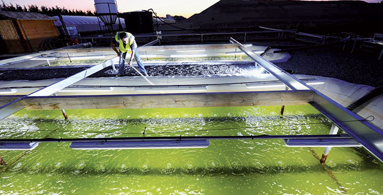 Il est porté par Agadir Haliopôle Cluster : Un projet de micro-algues dans le Souss-Massa