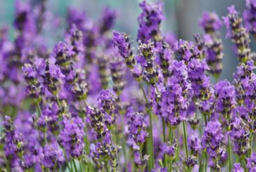 Plan Maroc Vert : La filière des plantes aromatiques et médicinales mise en avant à Tétouan
