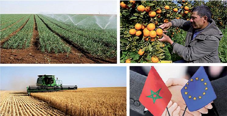 Parlement européen :  L'accord agricole Maroc-UE adopté en commission